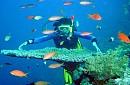 Chương Trình 1 Ngày: Hòn Cau - Hải Đăng Bảy Cạnh